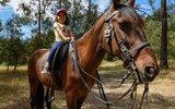 Cavalos fins de seama junho 1 160 100