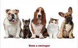 Cartaz bens animais 1 160 100
